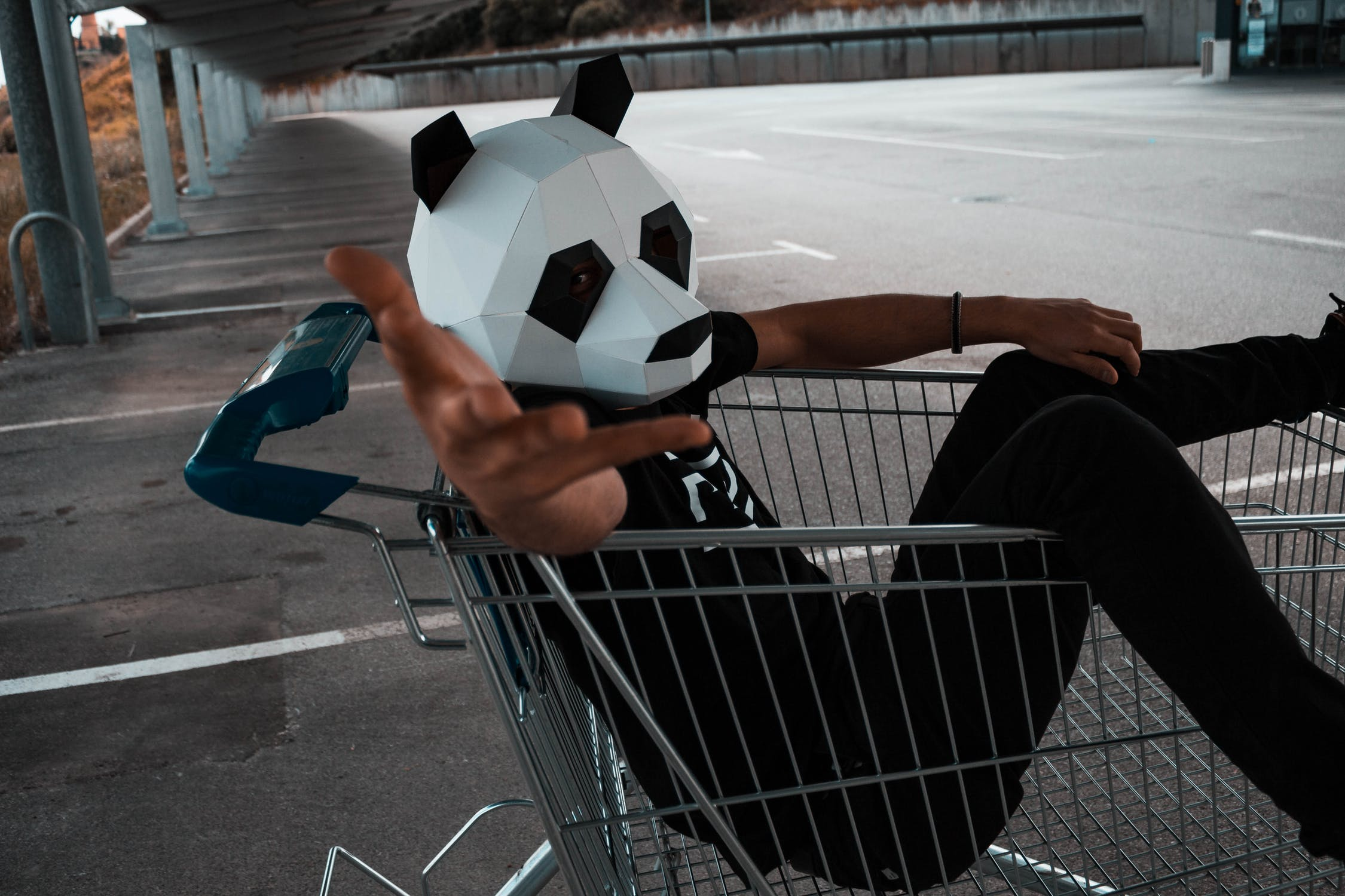 Panda in a shopping cart
